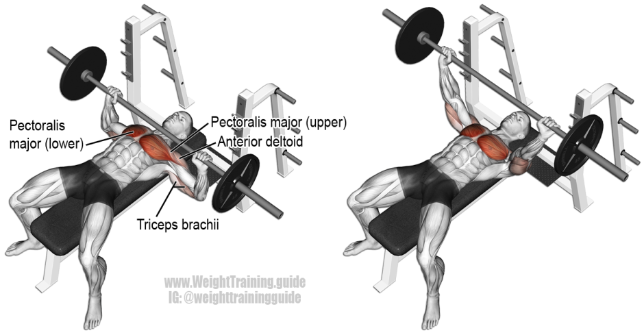 Barbell-Bench-Press (1).png